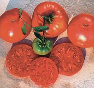 Crnkovic Yugoslavian Tomato