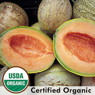 Amish Melon Organic