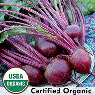 Detriot Dark Red Beet  Organic