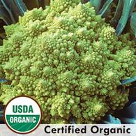 Romanesco Broccolli Organic