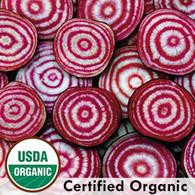 Chioggia Beets Organic