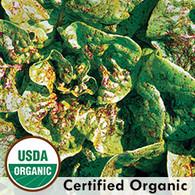 Bunte Forellenschluss Lettuce Organic