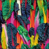 Five Color Silverbeet Organic
