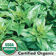 Bloomsdale Spinach Organic