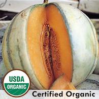 Charentais Melon Organic