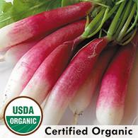 French Breakfast Radish Organic