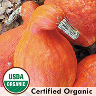 Boston Marrow Squash Organic