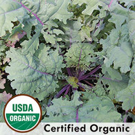 Red Russian Kale Organic