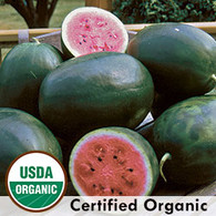 Picnic Watermelon Organic