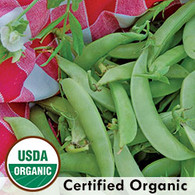 Amish Snap Pea Organic