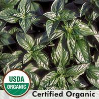 Genovese Basil Organic