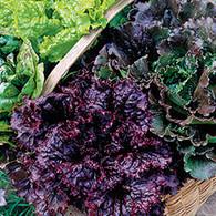 Lettuce Mixture