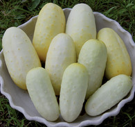 Boothbys Blonde Cucumber