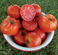 Italian Heirloom Tomato