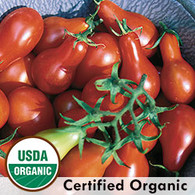 Austins Red Pear Tomato Organic