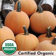 Winter Luxury Squash Organic