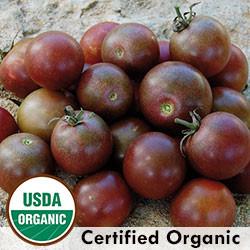 Black Cherry Tomato Organic Seeds - Seeds Savers Exchange | Amish Country Store in Branson, Missouri
