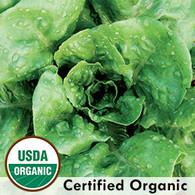 Winter Density Lettuce Organic Seeds - Seeds Savers Exchange | Amish Country Store in Branson, Missouri