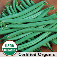 Provider Bean Organic Seeds - Seeds Savers Exchange | Amish Country Store in Branson, Missouri