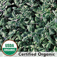 Greek Oregano Herb Organic Seeds - Seeds Savers Exchange | Amish Country Store in Branson, Missouri