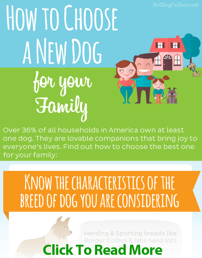 choose-a-puppy-inforgraphic-hotdogcollars-980-prss.png