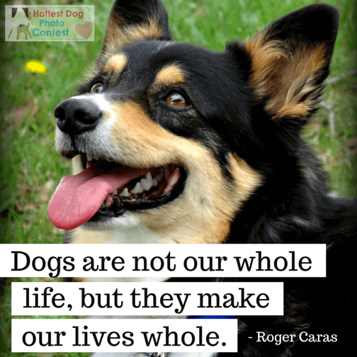 Dogs are not our whole lives, but they make our lives whole