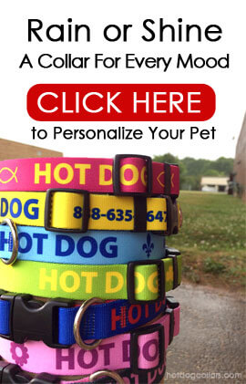 Custom ID DOg Collars Made with your personalized information