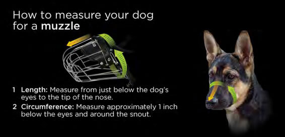 how-to-measure-for-a-dog-muzzle.jpg