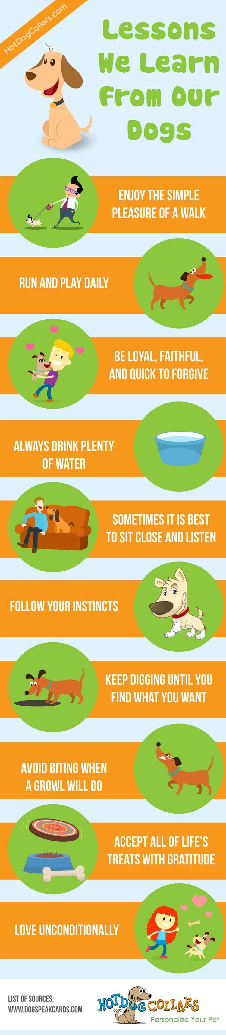 We love them but now it's time to learn from them, here are 10 lessons to be learned from our dogs.