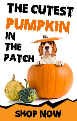 Halloween Dog Costumes, Collars, And More