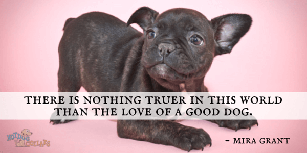 There is nothing truer in this world than the love of a good dog