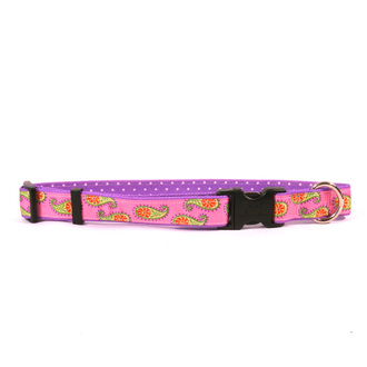Pink Paisley on New Pink Polka Grosgrain Ribbon Collar