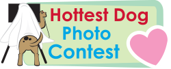 Hottest Dog Contest
