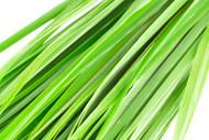 Lemongrass, Cymbopogon citratus- September Special 15% off