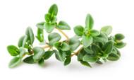 Thyme, Thymus vulgaris