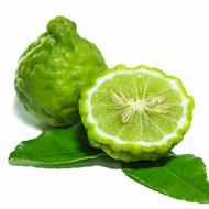 Bergamot, Citrus X bergamia