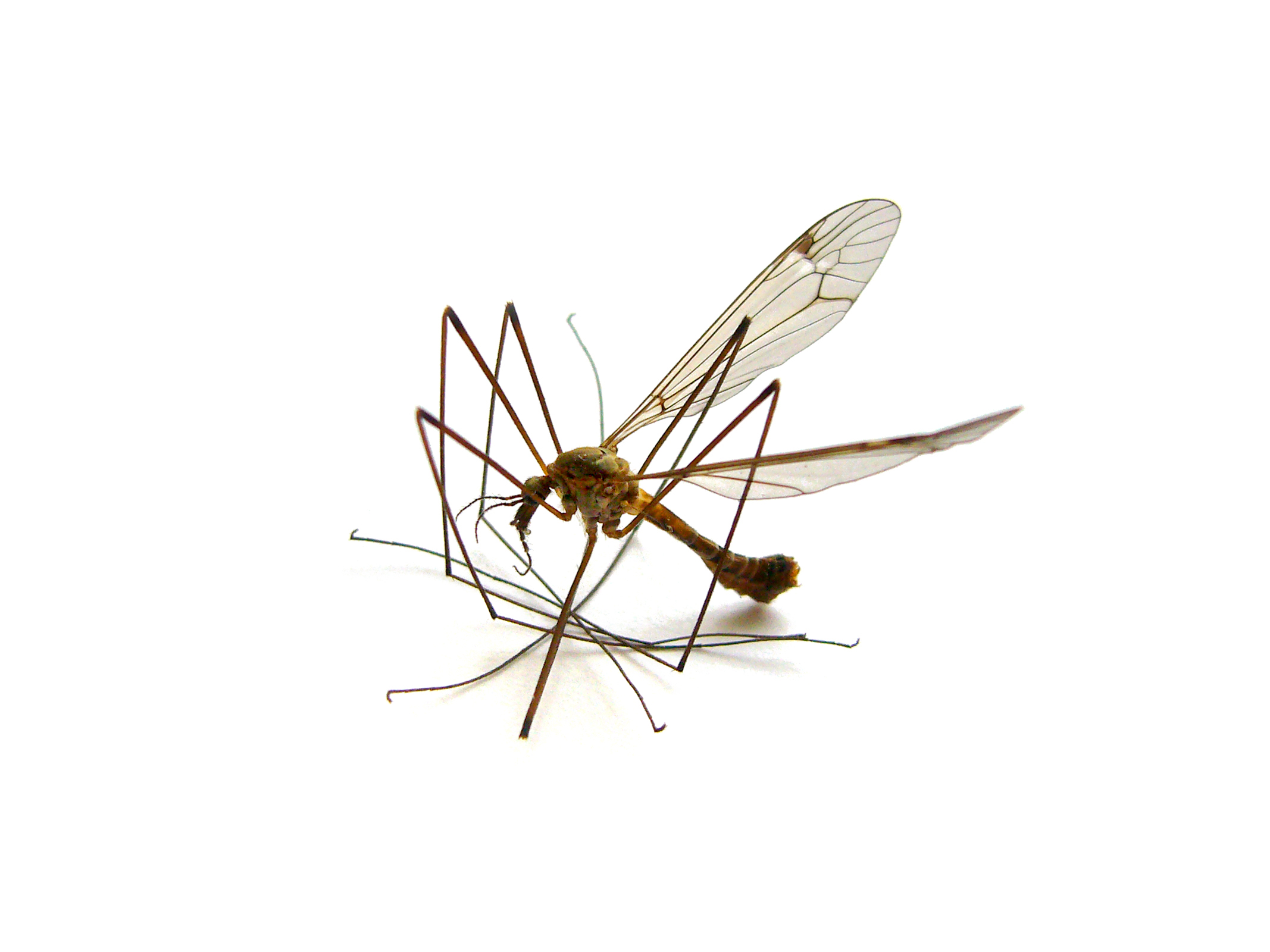 Mosquito control products and supplies