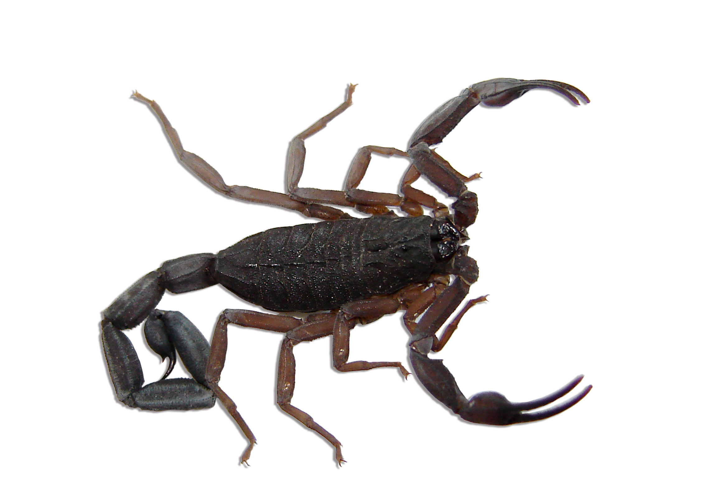 Scorpion Control Products and Supplies
