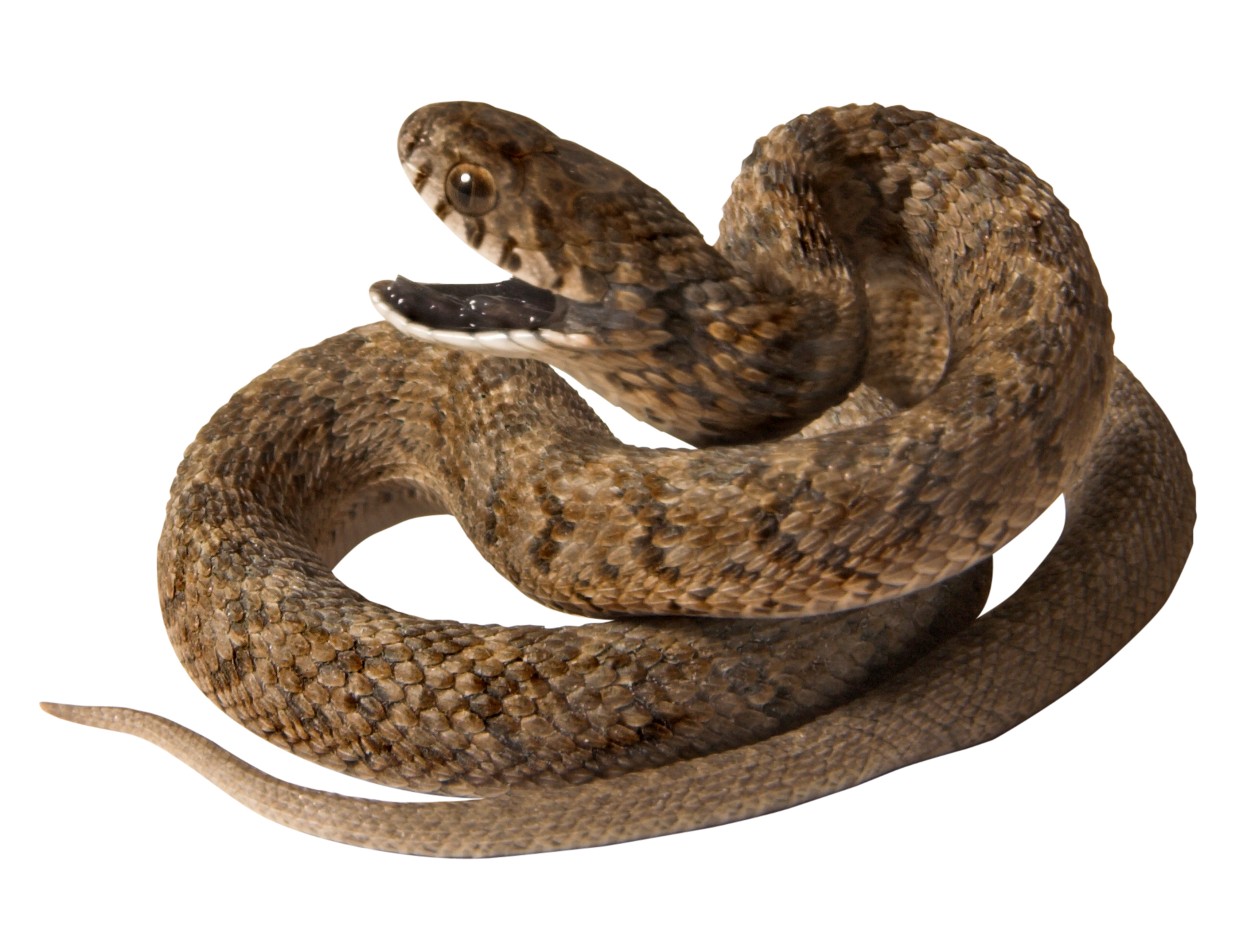 Snake Control Products and Supplies