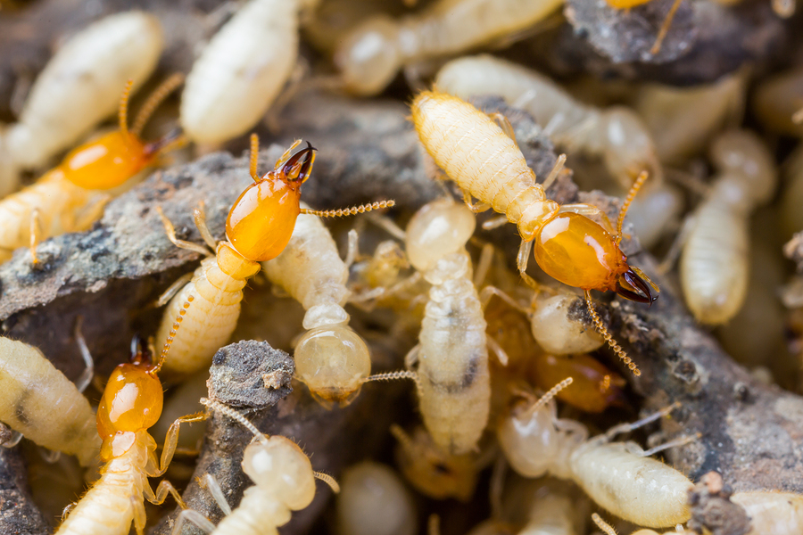 Termite Control Products and Supplies