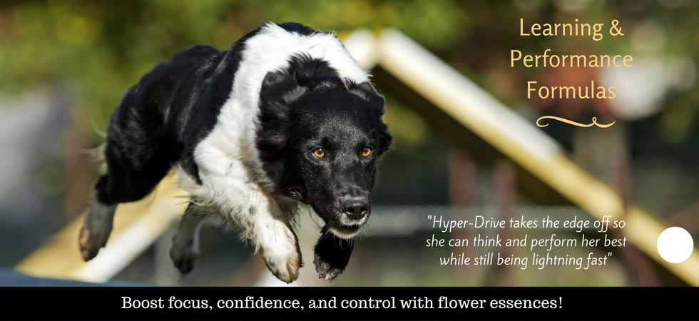 Natural Calming Remedies For Hyper Dogs