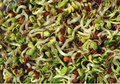 Ultimate Sprouting Sampler Kit