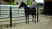 Powder Mountain 12 ft. Horse  Panel with pin 18 gauge  1  5/8 (available in store only)