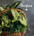 BASKET OF PLANTS            FROM $80.00