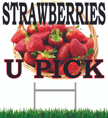 Strawberries U Pick Yard Sign!