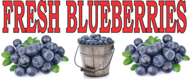 Fresh Blueberries with bucket and piles of berries.