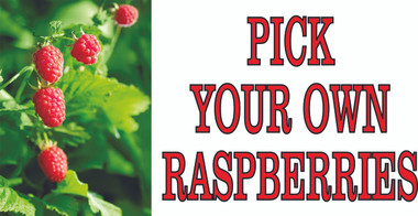 Pick your Own Raspberries Invites Customers in.