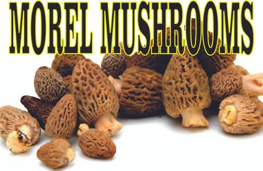 Morel Mushrooms Great Looking Farmers Market Banner.