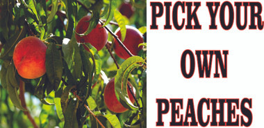 Pick Your Own Peaches Banners Lets Customers Know they Can Pick.