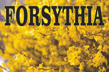 Forsythia Pant Banner so Colorful it ALways Gets Noticed.